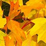 cropped-autumnleaves1.jpg